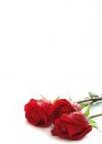 Designpapier-205 DIN-A4 (100 Blatt)  Rote Rosen