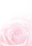 Designpapier-215 DIN-A4 (100 Blatt)  Rosa Rose