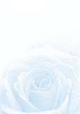 Designpapier-216 DIN-A4 (100 Blatt)  Blaue Rose