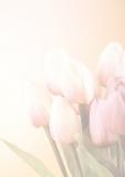 Designpapier-218 DIN-A4 (100 Blatt)  Blumen