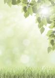 Designpapier-219 DIN-A4 (100 Blatt)  Grün Natur